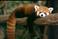 avatar for MagesticPanda