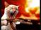 avatar for ZombiePyche