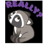 Raccoon really