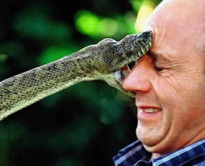 Play Snake Tamer