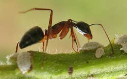 Play Ant Magnify Test