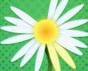 Play Daisy Petals