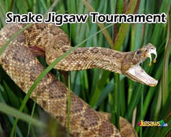 Play Snake Jigsaw Tournament