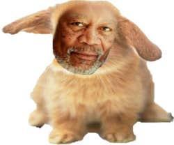 Play Flappy Freeman