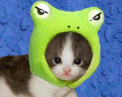 Play Flying Frog Cat