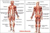 Play Anatomia e këmbës - Pjesa e parë