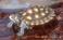 avatar for kluter