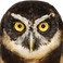 avatar for luzcifer