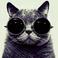 avatar for geckorus