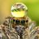 avatar for bijju