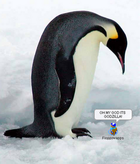 avatar for EpicPenguinFTW