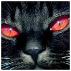 avatar for impim