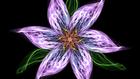 avatar for Lola96