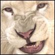 avatar for drakstar