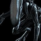avatar for Azelia17