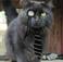 avatar for Cheshir