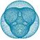 avatar for Jonthebloxer