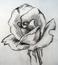 avatar for ThatCandyPiece