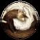 avatar for Misdoubtful