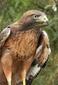 avatar for goldhawk3