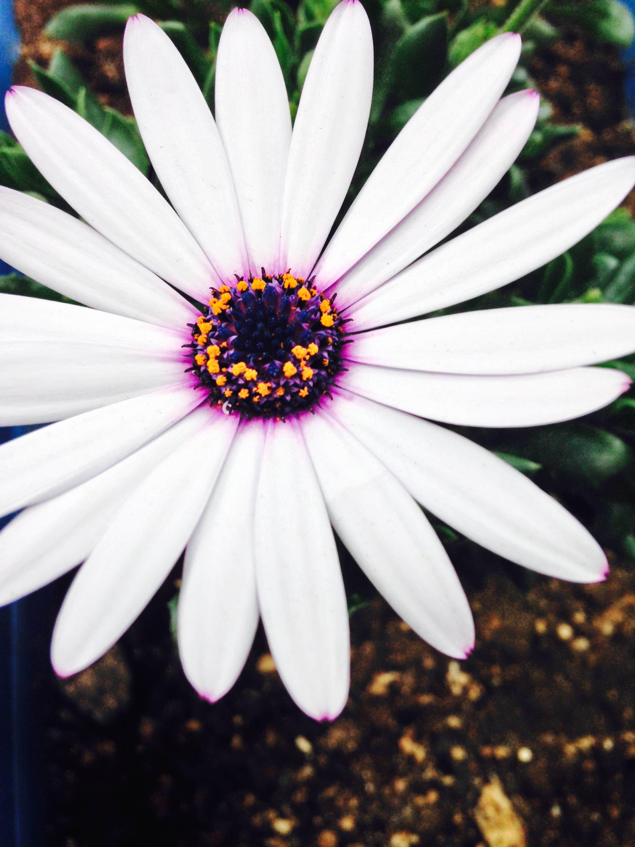 avatar for sange5