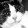 avatar for cutsycat