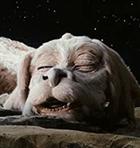 avatar for CaveDragon